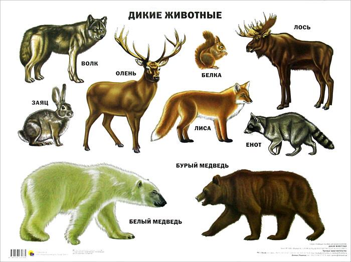 плакаты с картинками животных самом деле