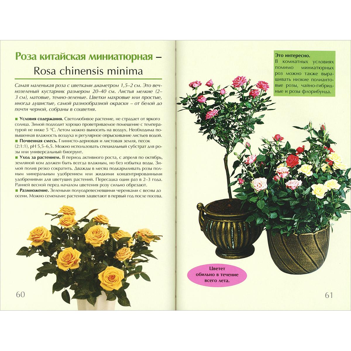 Комнатные цветы описания фото
